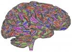 Światowy Dzień Mózgu